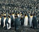 10,000 Penguins