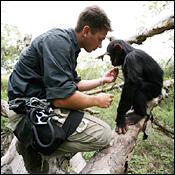 about-chimp-eden2.jpg